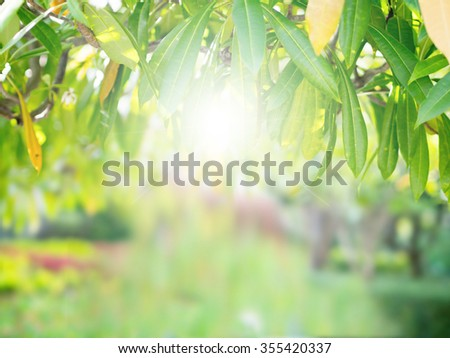 Abstract nature tree leaves on top background with glowing light