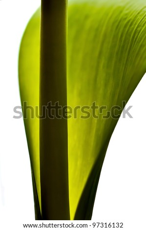 Abstract of a green leaf and stem - stock photo