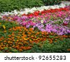 Abstract of array of bedding plants in greenhouse - stock photo