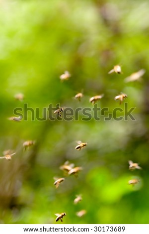 abstract of bees flying, one bee in focus - stock photo