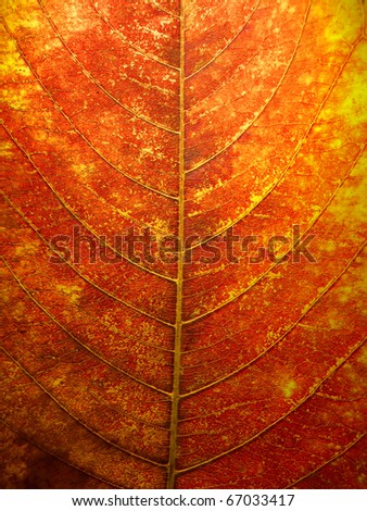Abstract of Detail and texture from orange leave - stock photo