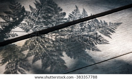 Abstract of fern leafs shadow on wooden floor in black and white. - stock photo