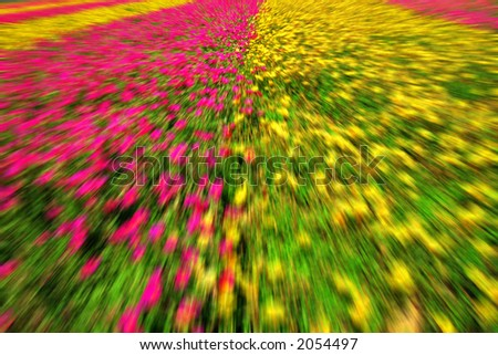 abstract of flowers