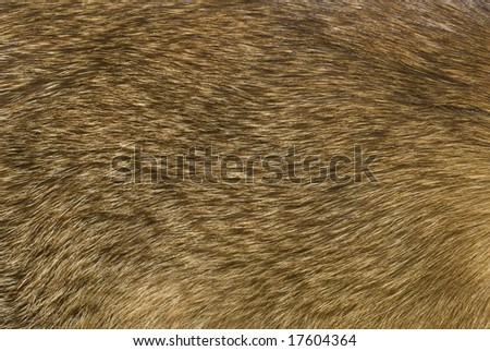Abstract of fox fur as background - stock photo