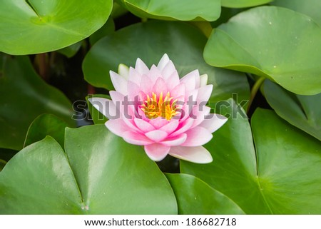 Abstract of Lotus - stock photo