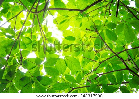 Abstract of Natural leaves with rays of light.