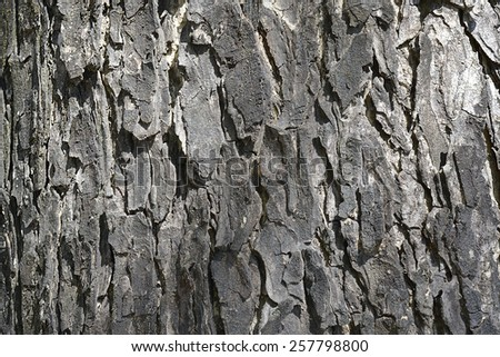 Abstract of tree bark texture for background - stock photo