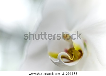 Abstract Orchid - stock photo