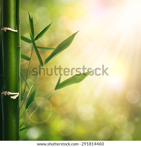 Abstract oriental backgrounds with bamboo grass for your design - stock photo