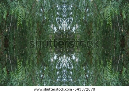 Abstract pattern of trees overhead view. Flat lay of leaves creative bohemian mandala for social media timeline, invitation greeting card, vintage wedding blog. Image with symmetry filter effect