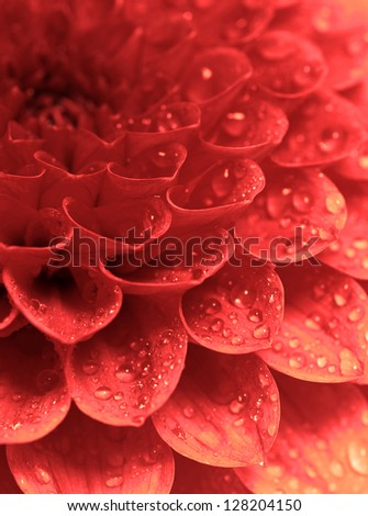 Abstract petals of a flower with drops - stock photo