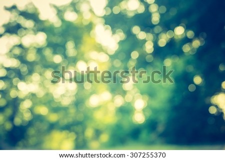 Abstract photo of defocused summer forest, photo useful as background. Vintage mood effect - stock photo