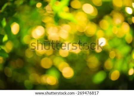abstract photo of light burst among trees and glitter bokeh lights. image is blurred and filtered.