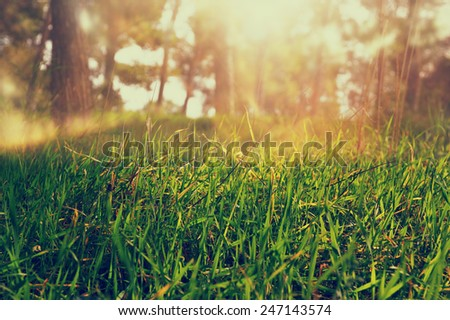 abstract photo of light burst among trees. image is filtered  - stock photo
