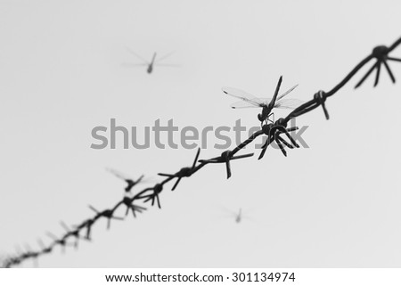 abstract photo silhouette of dragonflies on barbed wire