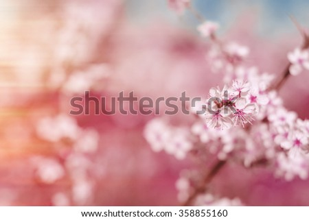 Abstract pink spring background with cherry sakura blooms in soft background of flowering branches and sky, early spring white flowers bokeh - stock photo