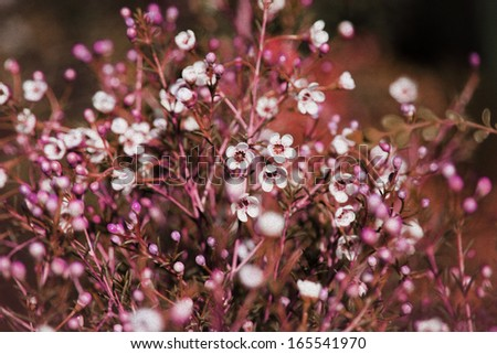 Abstract purple floral background with soft focus and old paper texture
