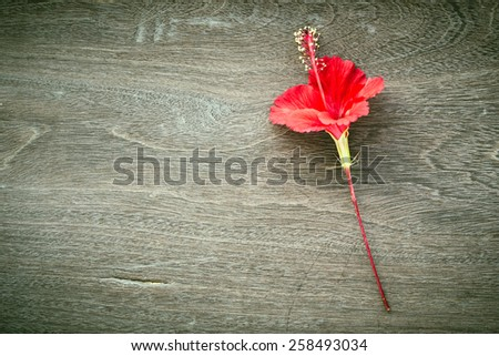 Abstract red hibiscus flower blossom on wood background - stock photo