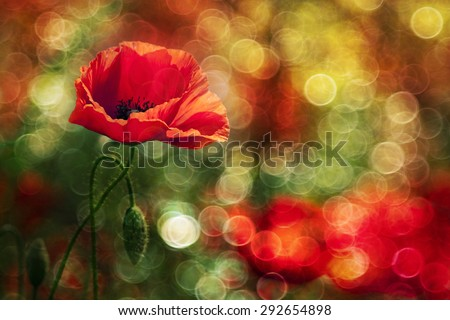 Abstract red wild poppy with light bubbles in Summer - stock photo