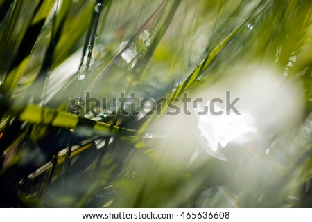 abstract reflections on the grass, for blurred background