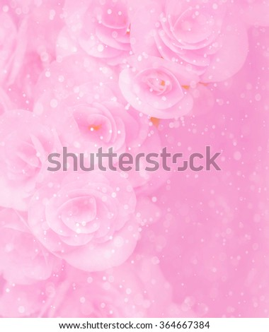 Abstract Rose flower with bokeh from water spray background,pastel tone style