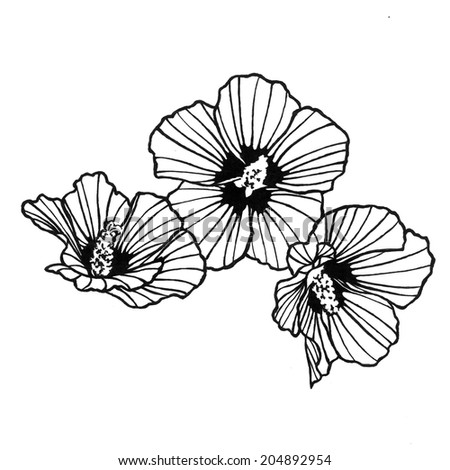 abstract rose of sharon art design element isolated on white background, artsy lines in petals, flower design hand drawn art in black ink, flower background pen and ink drawing - stock photo