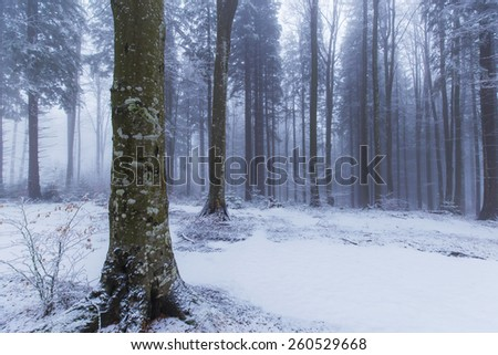 Abstract scenery with birch trees in the forest, snow and fog, in winter