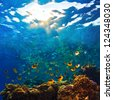abstract shallow coral garden with glossy water surface and colorful yellow fish playing in sunshine - stock photo