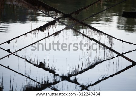 Abstract shapes and patterns of tension rods and weed underneath a timber wharf - stock photo