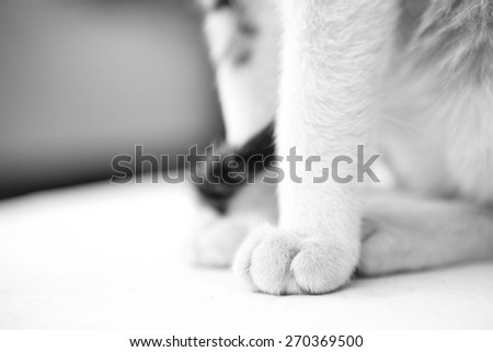 Abstract shot of a feet of a beautiful cat. - stock photo