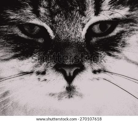 abstract sketch clip-art cat portrait  - stock photo