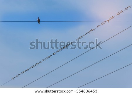Abstract soft blurred and soft focus flocks of the small birds, grip on high voltage power lines with the beautiful sky and cloud in Thailand,  with the beam light and len, flare effect tone.