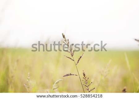Abstract soft focus Nature Summer background, Yellow Grasses or Meadow