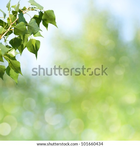 abstract spring and summer backgrounds with beautiful bokeh - stock photo