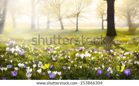 abstract sunny beautiful Spring background  - stock photo