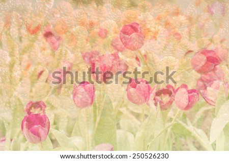 Abstract. Sweet color Tulips flowers in bokeh texture soft blur for background with pastel vintage retro style.
