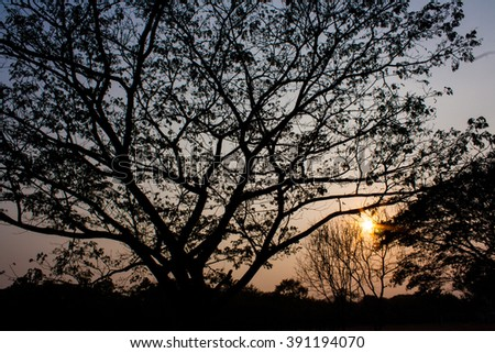 Abstract symbol idea. The scary of tree, Leaves branch silhouette with beautiful sunset light