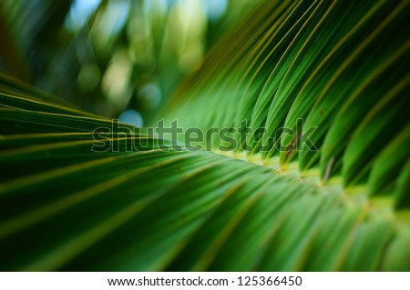 Abstract Texture of palm leaves. - stock photo
