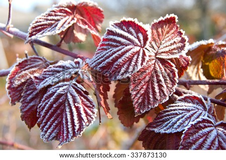 Abstract Texture of some leaves, covered with ice and snow in winter day. Soft selective focus. Perfect background or texture. - stock photo