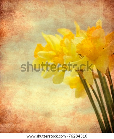 Abstract textured closeup of daffodil flowers for vintage look - stock photo