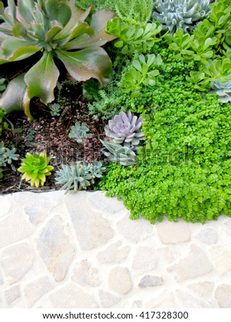 Abstract Top Succulent Landscaping Textures Vignette - stock photo