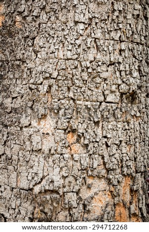 abstract tree bark, background texture
