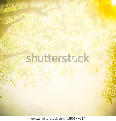 Abstract Tree branch in the woods, with lens flare effect with texture background - stock photo