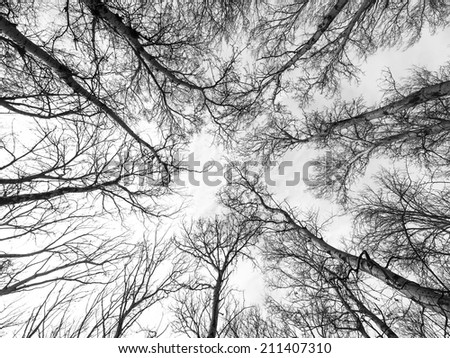 abstract tree branches canopy background - stock photo