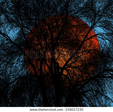 Abstract tree branches isolated on sky background  - stock photo