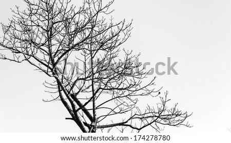 Abstract tree branches isolated on white background - stock photo