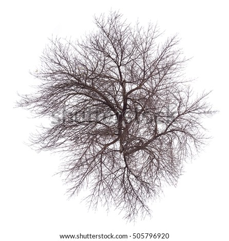 abstract tree isolated on white background