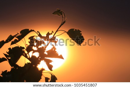 abstract tree twig om susnet sky background