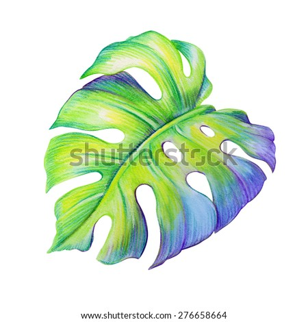 abstract tropical monstera green leaf, watercolor illustration isolated on white background - stock photo