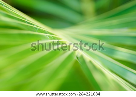 Abstract tropical nature: exotic macro of Green palm tree leaf  - stock photo